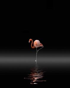 Minimalist and Cinematic iPhone Photography by Dirk Fleischmann