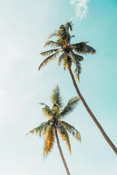 Tree, palm tree, sun and sky HD photo by James Connolly (@jampatcon) on Unsplash