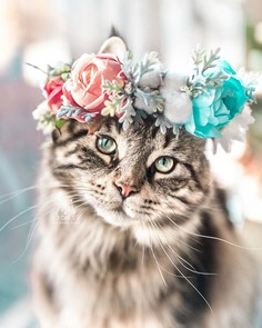 Cute Flower Crowns For Animals 6 This Artist Is Making Flower Crowns For Animals And They Look Majestic