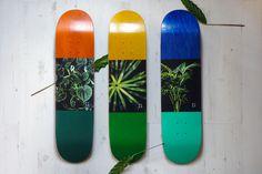 skateboarding, graphic