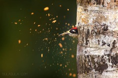 #bestbirdshots: Attractive Birds Photography by Petr Bambousek
