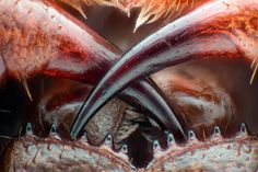 Winners Of Nikon Small World Photography Competition 2016