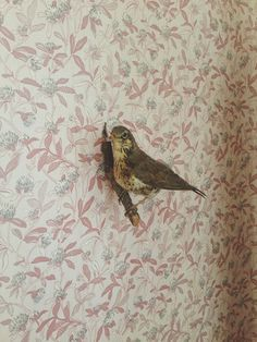 OLD CHUM #interior #pattern #design #bird #photography #wall #sparrow #wallpaper #decoration