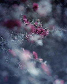 Fine Art Flowers Photography by Sara Möller