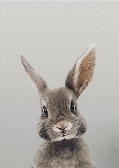 Cute! #animaux #wildlife