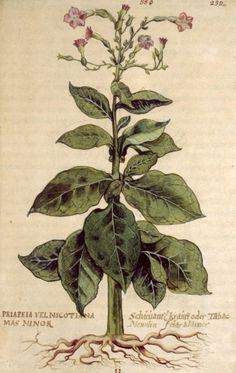 non3.jpg 1255×1980 pixels #type #print #botanical #illustration