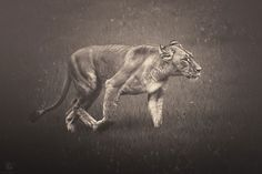 africa-souls-zoo-photography-manuela-kulpa-9 #photography #animals