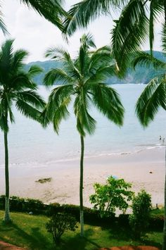 Have a Nice Day #palm #tree #dream #the #beach