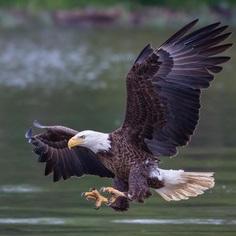 #birdfreaks: Striking Bird Photography by Adam Berry