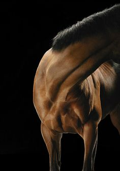 Фотограф Tim Flach #photography