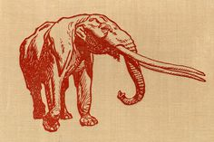 photo #elephant
