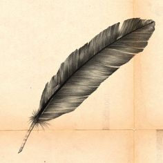 Feather | Alexandre Ruda #feather #illustration #paper