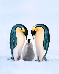 From the Amazon to Antarctica: WIldlife Photography by Frans Lanting