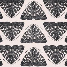 moth | Tumblr