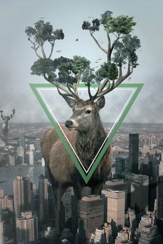 RAWZ #deer #tree #photo #city #design #stag #grow #triangle #nature #manipulation #massive #photography #tall #collage #animal #beauty