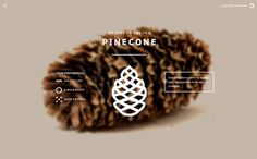 What's your object? on Behance #website #pinecone #typography