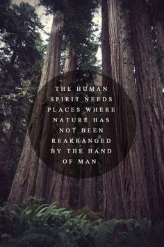 tumblr_m1m7tjbB6R1qazj6vo1_500.jpg (498×750) #truth #trees