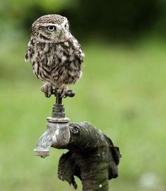 tumblr_m0i9buLkXp1qargfho1_1280.jpg (667×768) #owl