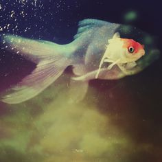 "the ""in"" within ♥ ☆ ♥ #fish #mystic #surreal #pisces #underwater #cosmic"