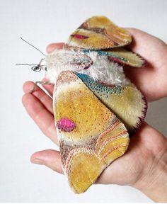 textile moths #moths #fabric #textile