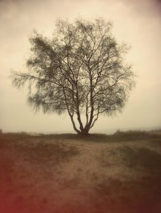 FOTO « DANIEL JOURNAL #photography #tree