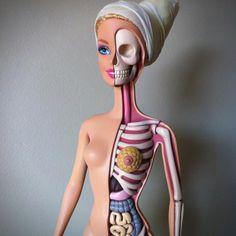 Barbie Anatomy Model by Jason Freeny 00 #interior #barbie #anatomy #doll
