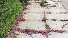 Sidewalk #urban #pink #athens #city #downtown #girly #photography #nature #sidewalk #slr #greece #green