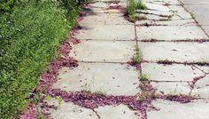 Sidewalk #urban #pink #athens #city #downtown #girly #photography #nature #sidewalk #slr #greece #green