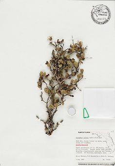 type #specimen