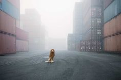 Big City Lion by Julie Marie Werner