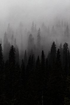 tumblr_lb9pxv3rhj1qz7lxdo1_500.jpg (467×700) #black and white #tree #woods #noir