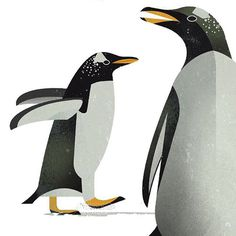 Animal Illustration by Deiter Braun #wildlifefaces #wildlife #dieweltderwildentiere #animals #illustration #illustratedanimals #penguin #boo