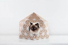 The Cat Box by Delphine Courier-5 #sustainable #pattern #cat