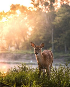 Fantastic Nature Photography by Logan Brown