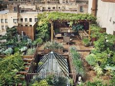 149705_367055966677158_104438892938868_998044_922115293_n.jpg (618×463) #rooftop #plants #design #architecture #green