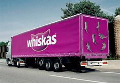 Whiskas Advertisment Design Idea ins