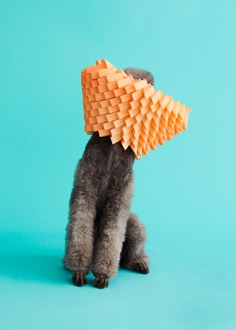 Photographer Winnie Au Captures the Unique Personalities of Dogs Adorned in Sculptural 'Cones of Shame' | Colossal