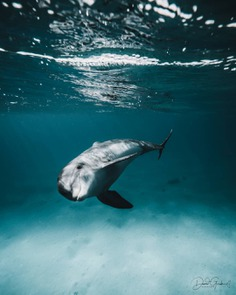 Exceptional Underwater and Ocean Photography by David Girsh