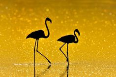 Merde! - Photography (byNikolai Zinoviev,... #photography #animals