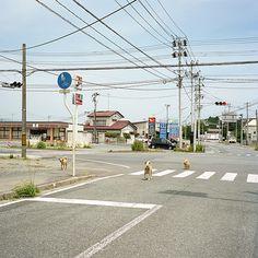 Toshiya Watanabe : Fraction Magazine #watanabe #photography #toshiya #japan