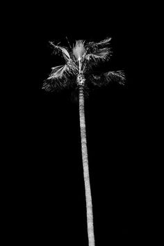 julien roubinet photography - Palm tree #palm #tree #b&w #photography #nature #poster