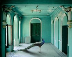 Karen Knorr » India Song #india #phoyography