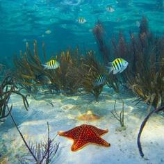 Striking Underwater Photography by Ben Hicks