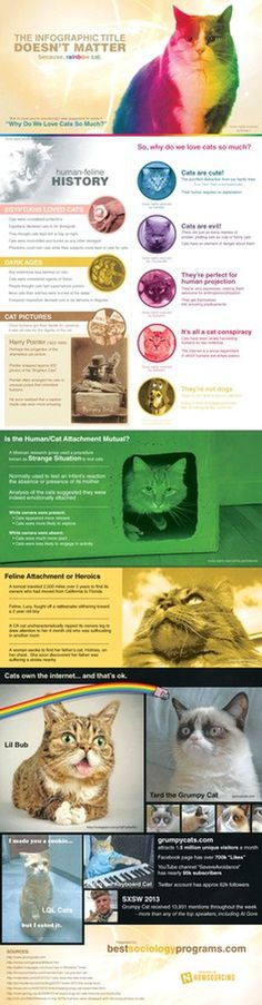Why Do We Love Cats So Much? #infographic #design #graphic