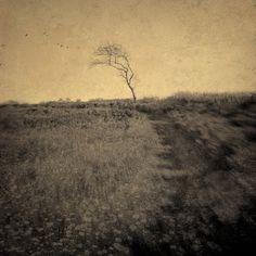 Natalia's Path 2, Artwork by Joan Kocak #tree
