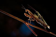 Macro Photography by Fabien Bravin