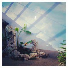 Secret Garden - Anastasia Serdukova, 2016 #photo #doubleexposure #multipleexposure