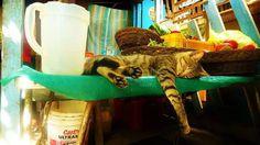 https://www.facebook.com/DavidWalbyPhotography #sleep #cat #hang #peru #chill