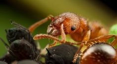 Insect Photography by Alistair Campbell » Creative Photography Blog #inspiration #photography #macro