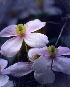Beautiful Macro Flowers Photography by Tasha Tajdel